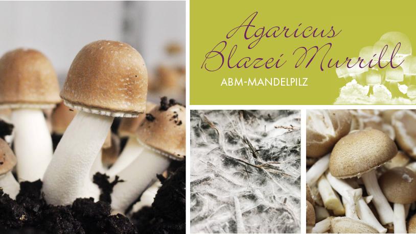 AGARICUS BLAZEI MURRILL (ABM)