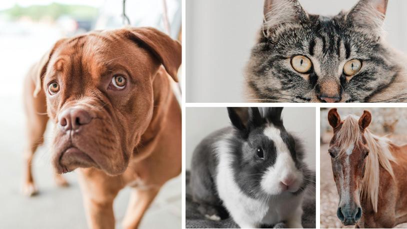 SPÉCIALEMENT POUR VOTRE ANIMAL
